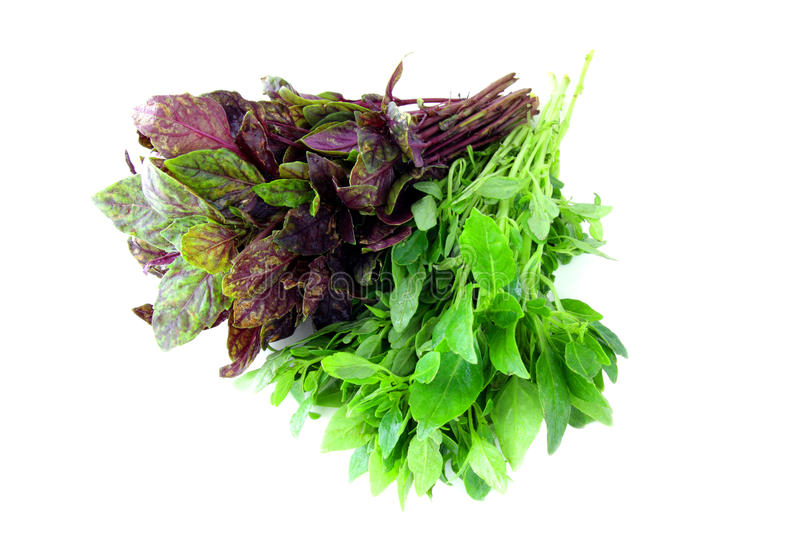 Download Basil on white stock photo. Image of violet, herbal, isolated - 14466042