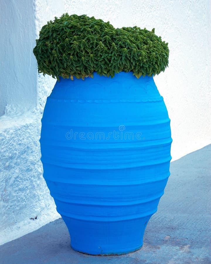 Basilic dans le choc en céramique bleu photographie stock