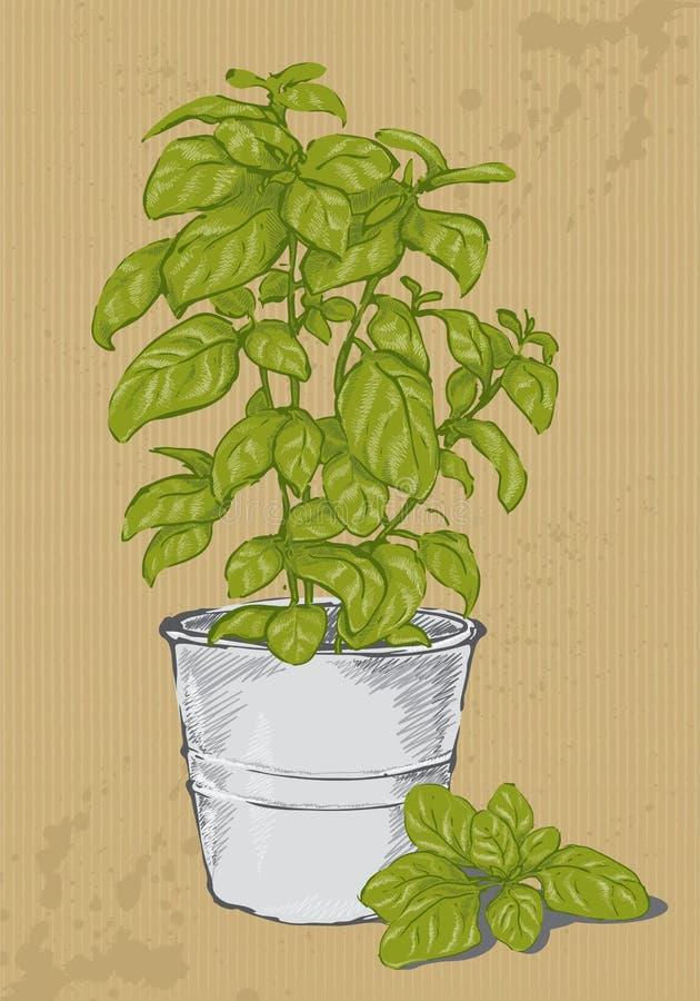 Basilic mis en pot illustration de vecteur