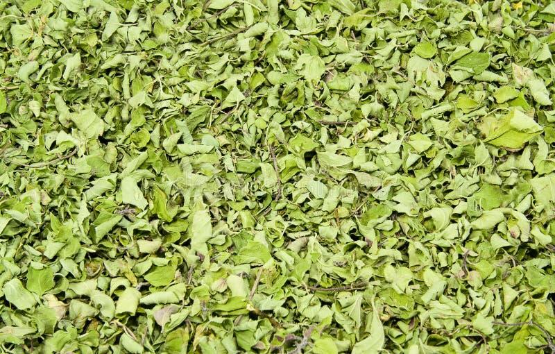 Basilico dolce secco fotografie stock