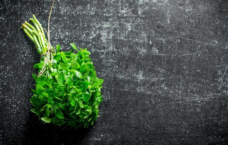 Basilico sviluppato nel giardino domestico immagini stock libere da diritti