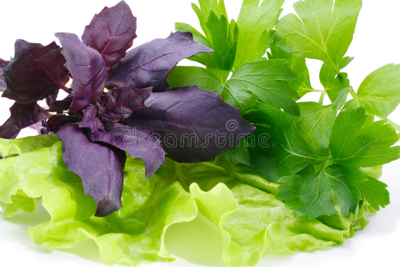Basilicum, peterselie en sla stock foto
