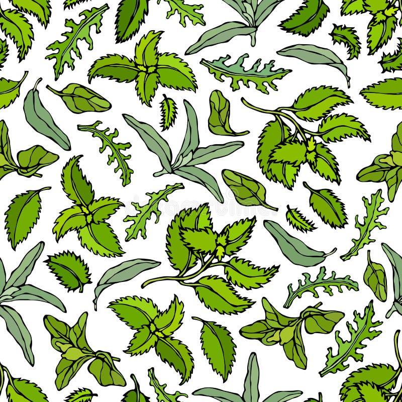 Basilicum, Salie, Arugula, Munt, Marjolein Naadloos Eindeloos Patroon Herb Kitchen Background Realistische hand getrokken illustr vector illustratie