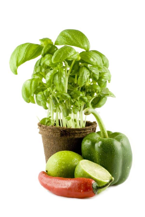 Basilikum, Kalk, Paprika u. grüner grüner Pfeffer getrennt lizenzfreies stockfoto