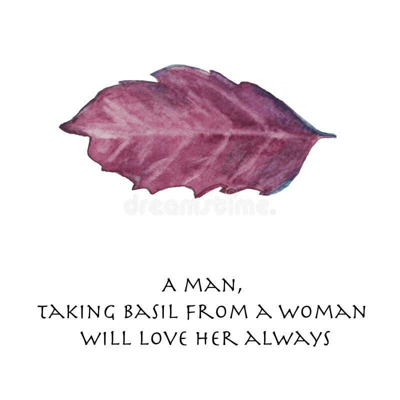 Basilu liść z wycena ilustracja wektor