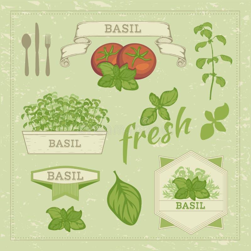 Basilu pomidor i liście royalty ilustracja