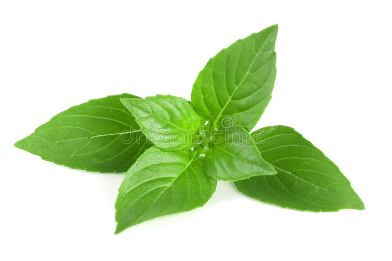 Basilu ziele liście na białym tła zbliżeniu zdjęcia stock