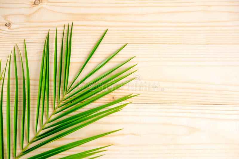 The basis for the banner with a palm leaf. Tropical banner design. Frame for text with leaf of palm tree on a wooden royalty free stock photos
