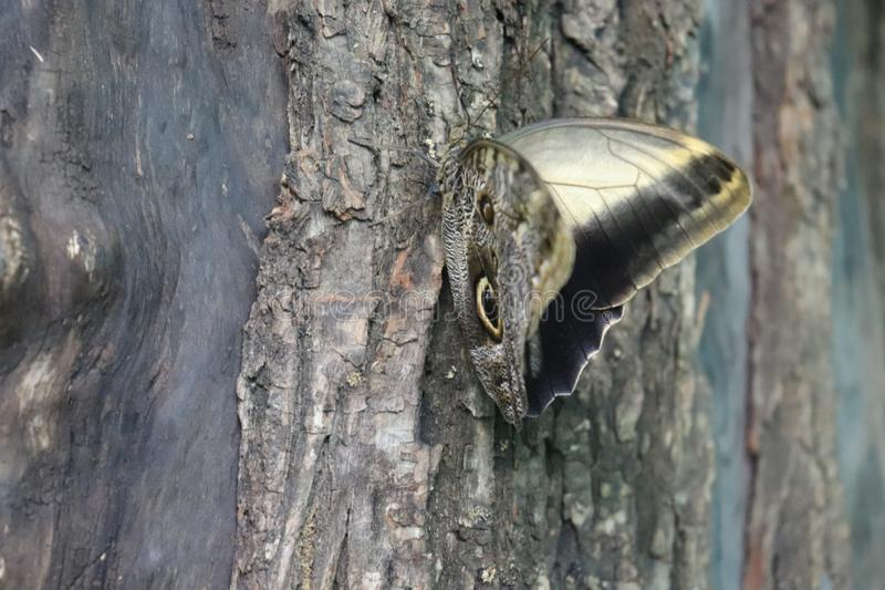 Basisrecheneinheit auf Baum lizenzfreies stockfoto