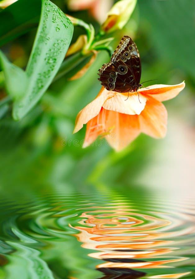 Basisrecheneinheit auf der Blume stockbild