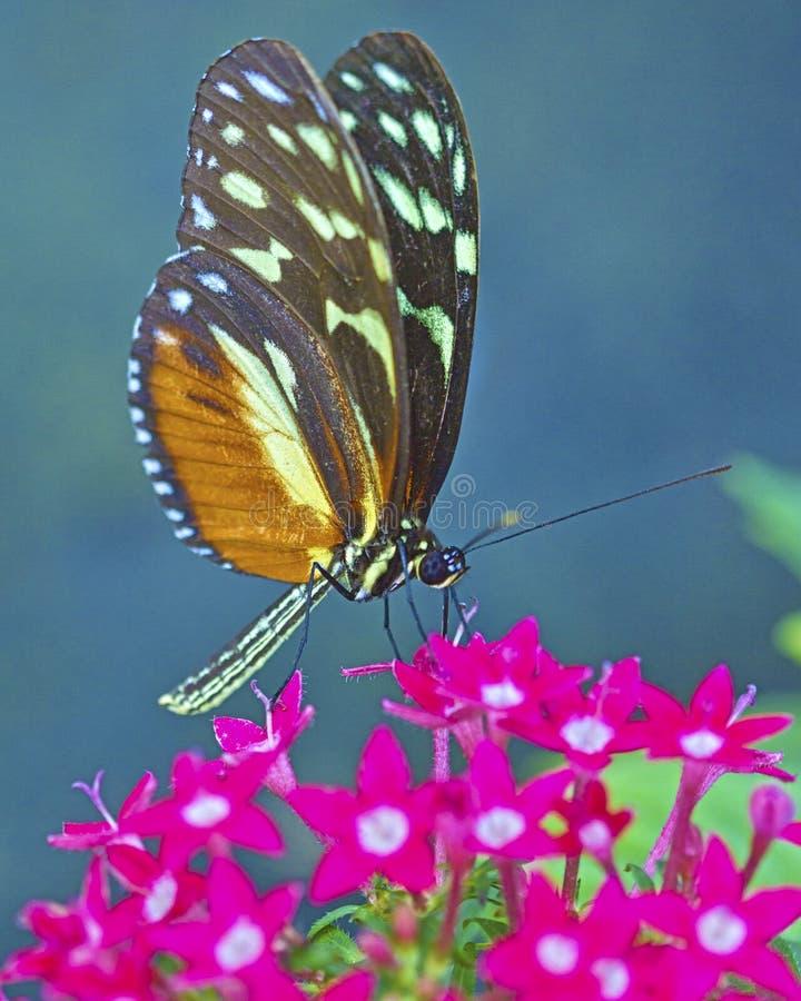 Basisrecheneinheit gehockt auf einer Blume stockfotos
