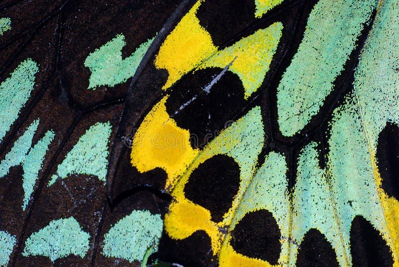 Basisrecheneinheits-Flügel-Makro lizenzfreies stockfoto