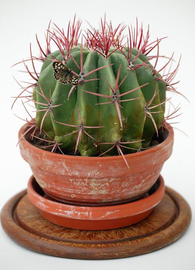 Basisrecheneinheits-Kaktus stockbilder