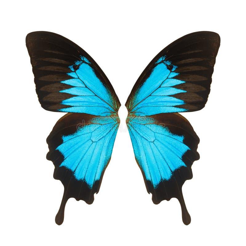 Basisrecheneinheitsflügel stockbild