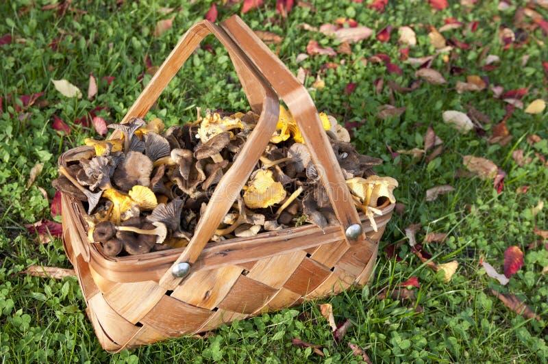 Download Basket stock image. Image of decorated, leafs, abundance - 27172827