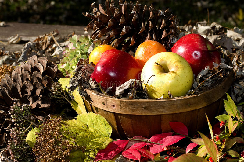 Download Basket of Apples stock image. Image of leaves, withered - 21949397