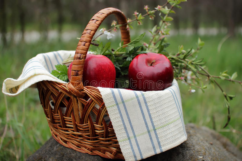Download Basket with apples stock image. Image of nature, spring - 39504553