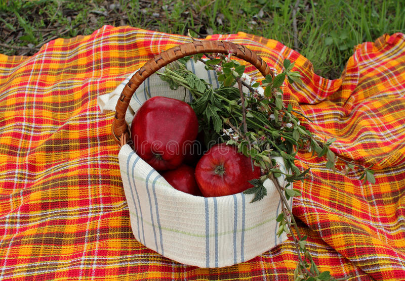 Download Basket with apples stock photo. Image of backgrounds - 39504662