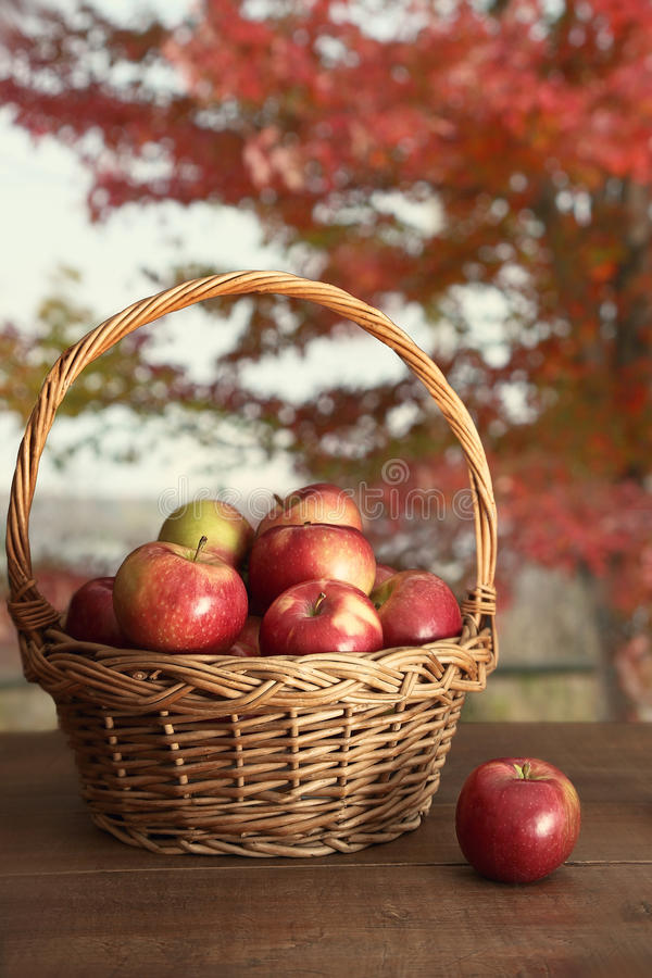 Download Basket of apples on table stock photo. Image of leaf - 32874684