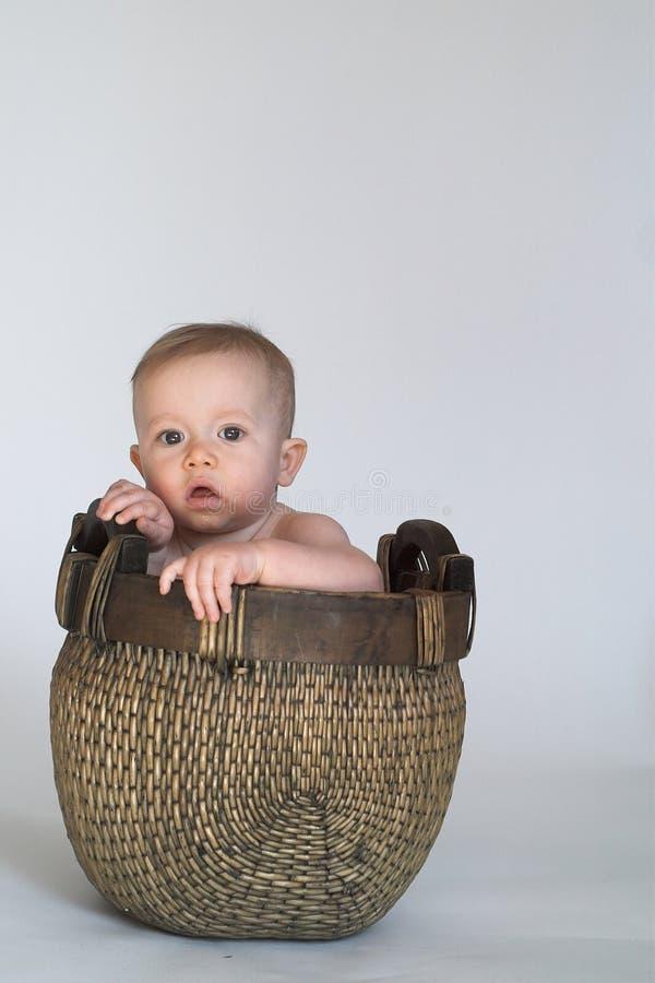 Basket Baby Stock Photos