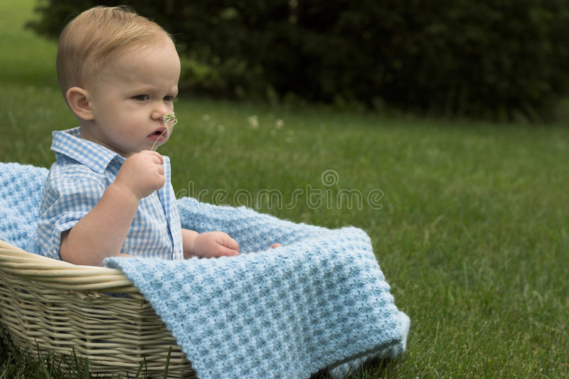 Download Basket Baby stock photo. Image of grass, grassy, carefree - 2656126