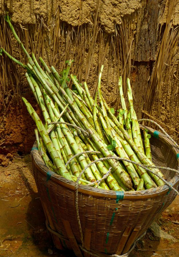 A basket of bamboo shoot near a dry grass wall royalty free stock images