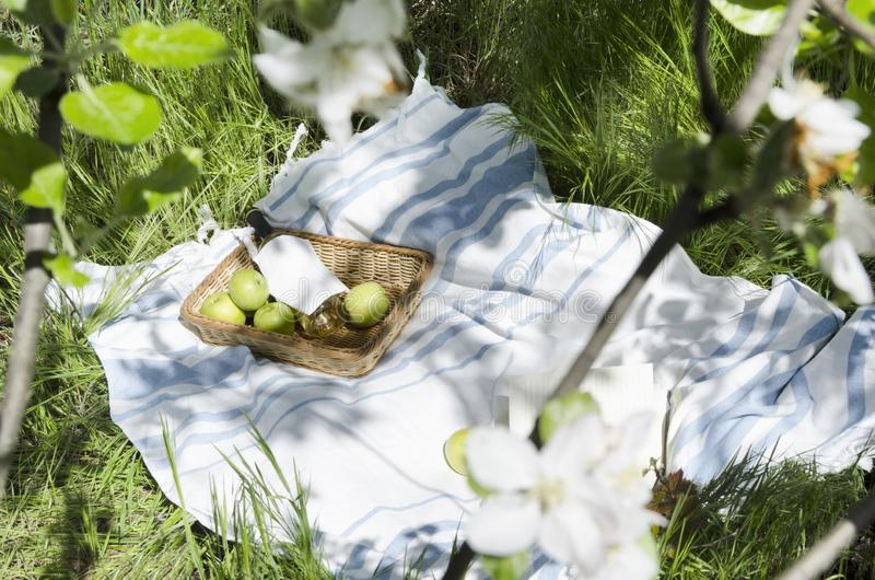 Basket and bottle of white wne,apples on the whie blaket.Leisure lifestyle.Relax at the blooming apple garden royalty free stock photos