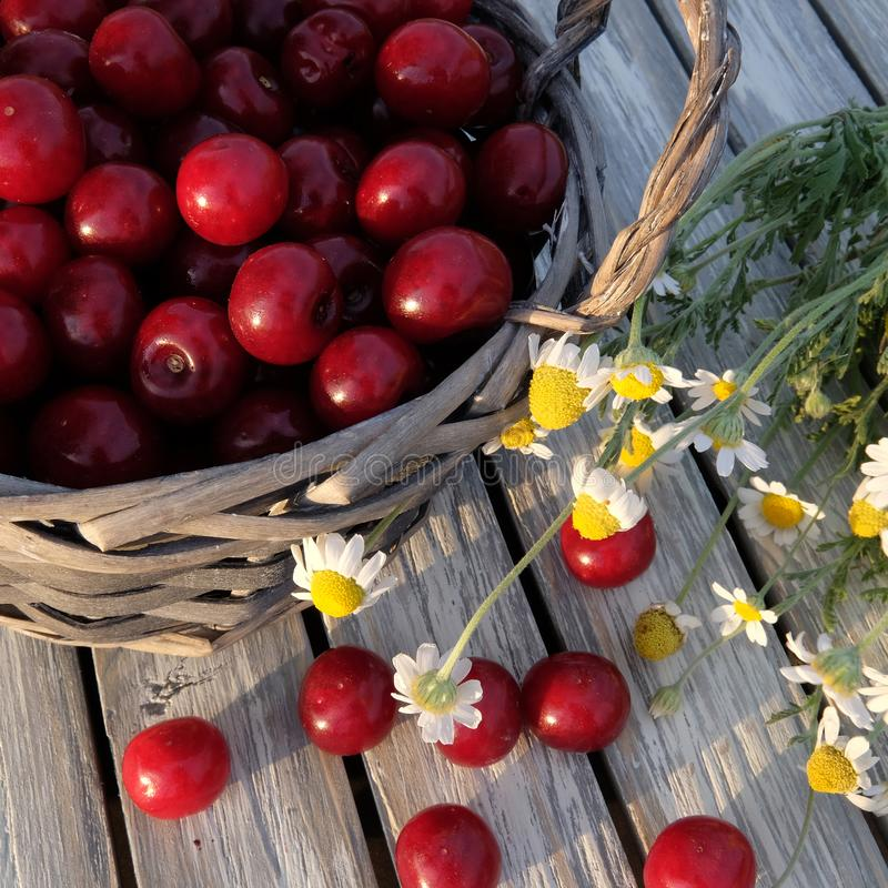 A basket of cherries stock images