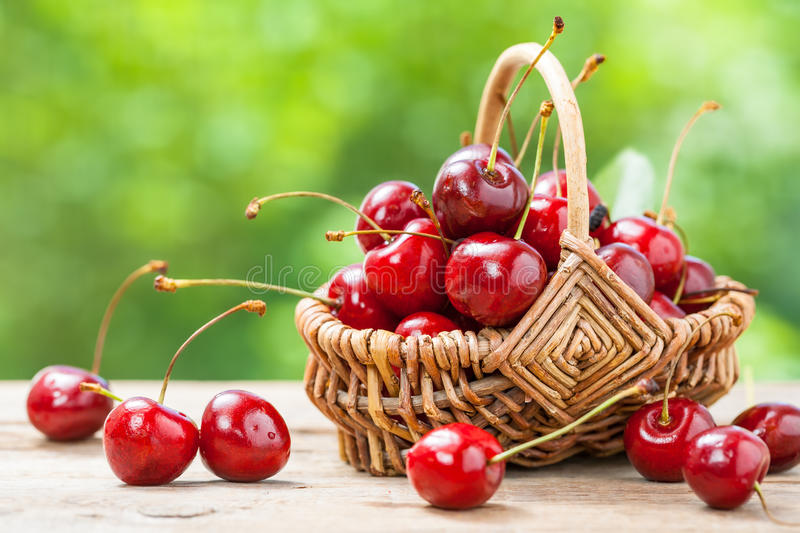 Basket with cherry close up on table. In garden royalty free stock photo