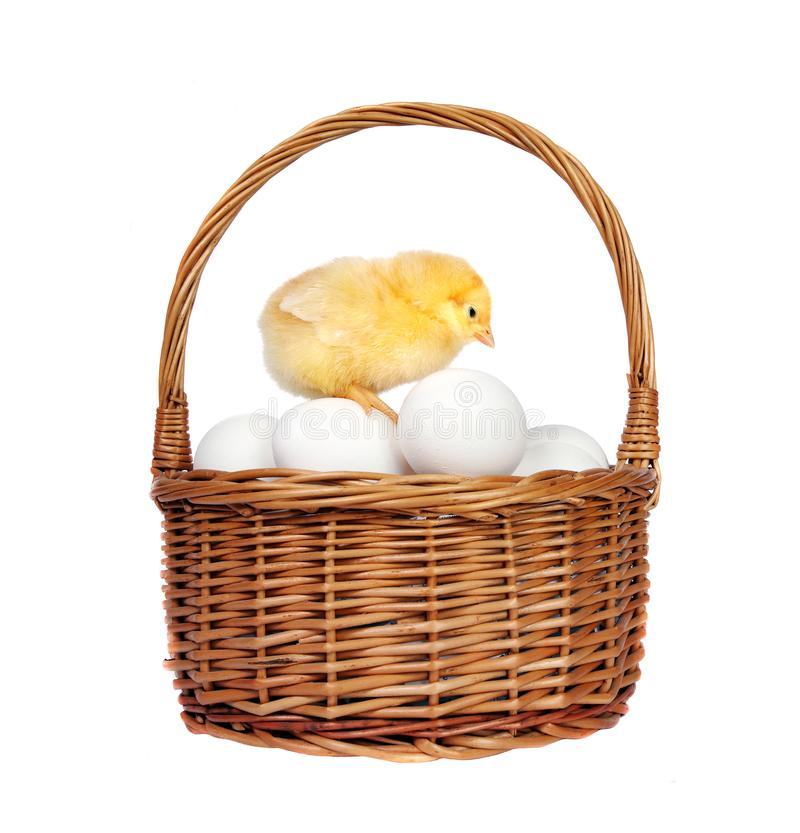 Basket of chicken eggs and little chicken isolated on white royalty free stock image