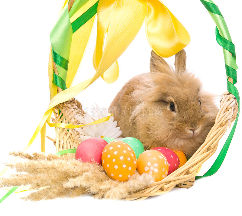 Basket with colored eggs and bunny stock photos