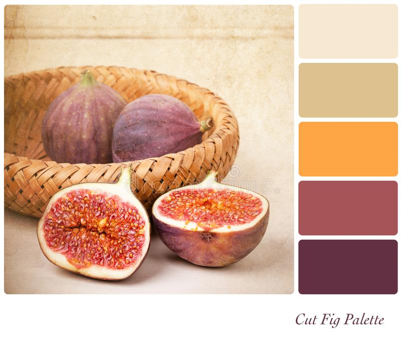 Cut Fig Palette. A basket of cut and whole figs, vintage style, in a colour palette with complimentary colour swatches stock photography