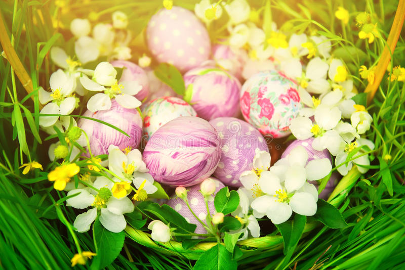 Basket with Easter eggs and spring flowers around. Basket with Easter eggs on a background of green grass and delicate spring flowers branch of apple blossoms stock images