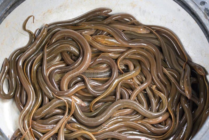 A basket of eels at market. In vietnam stock image