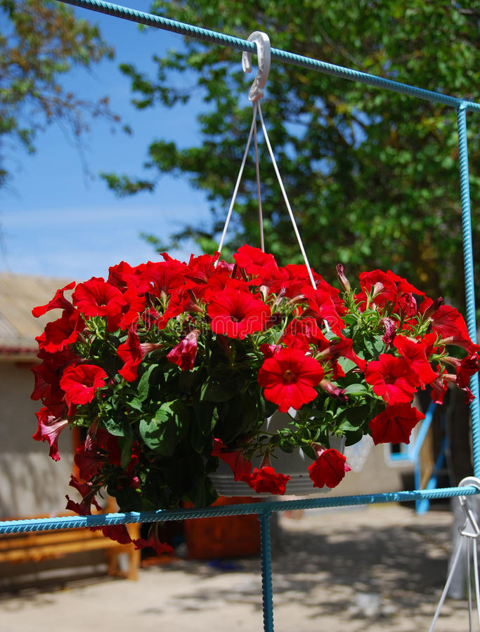 Download Basket of flowers stock image. Image of natural, flowers - 19402511