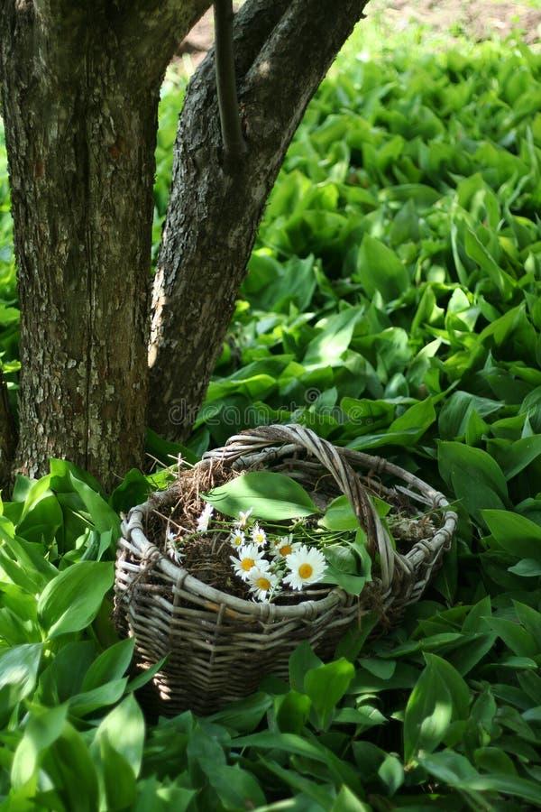 Basket of flowers stock image