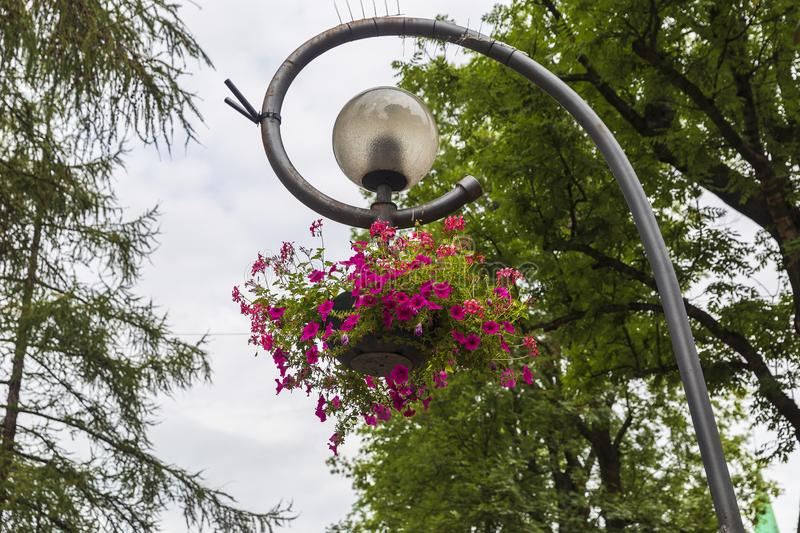 Basket with flowers hanging on a street lamp. Nature stock photos