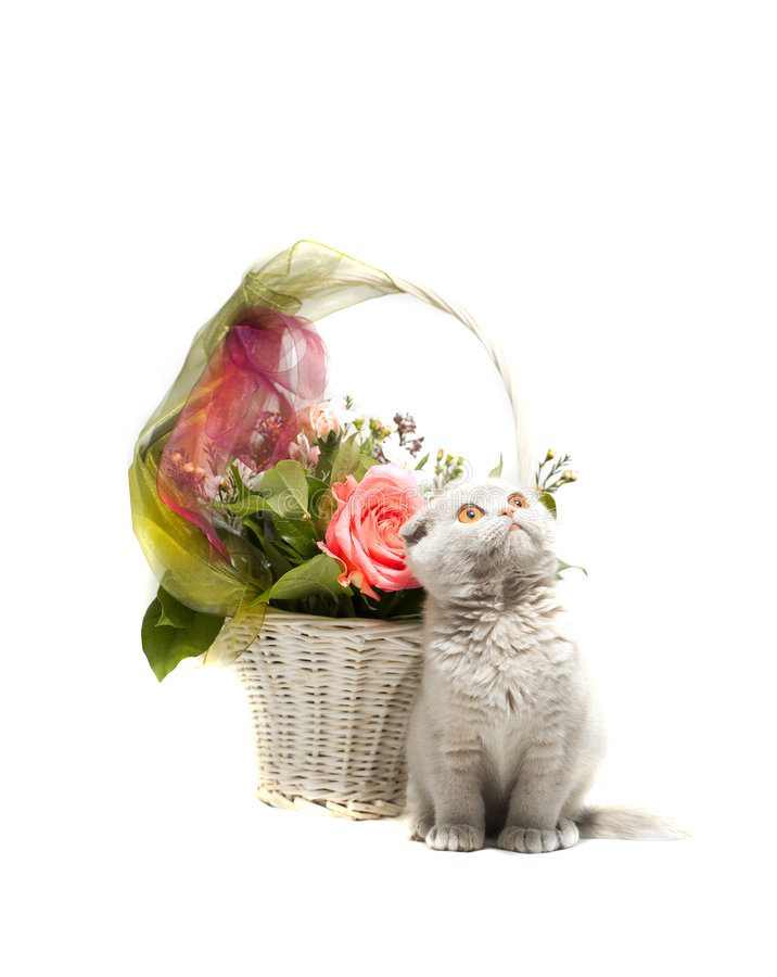 Basket of flowers and a kitten royalty free stock photo