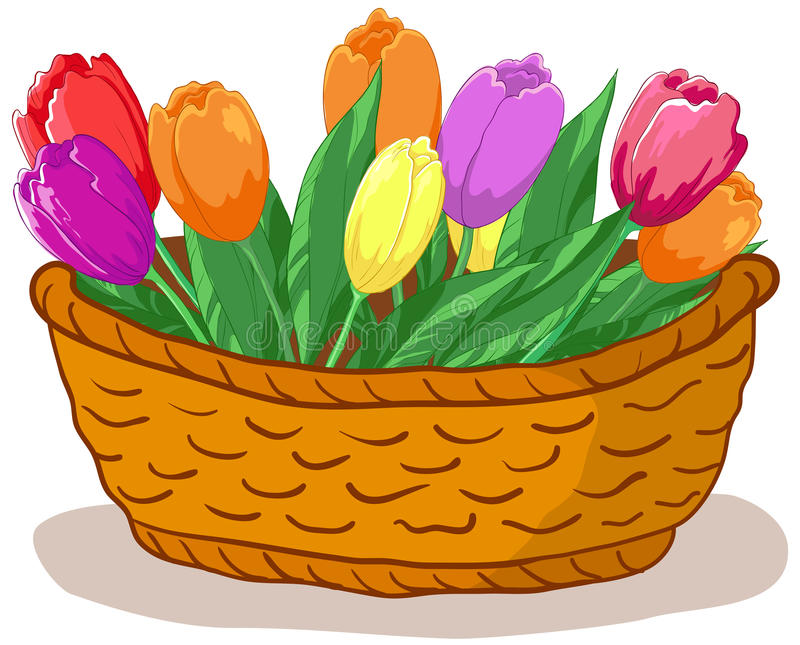 Basket with flowers tulips. Wattled basket with flowers tulips and green leaves stock illustration