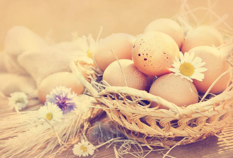 Basket of fresh organic farm eggs on rustic background, toned royalty free stock image
