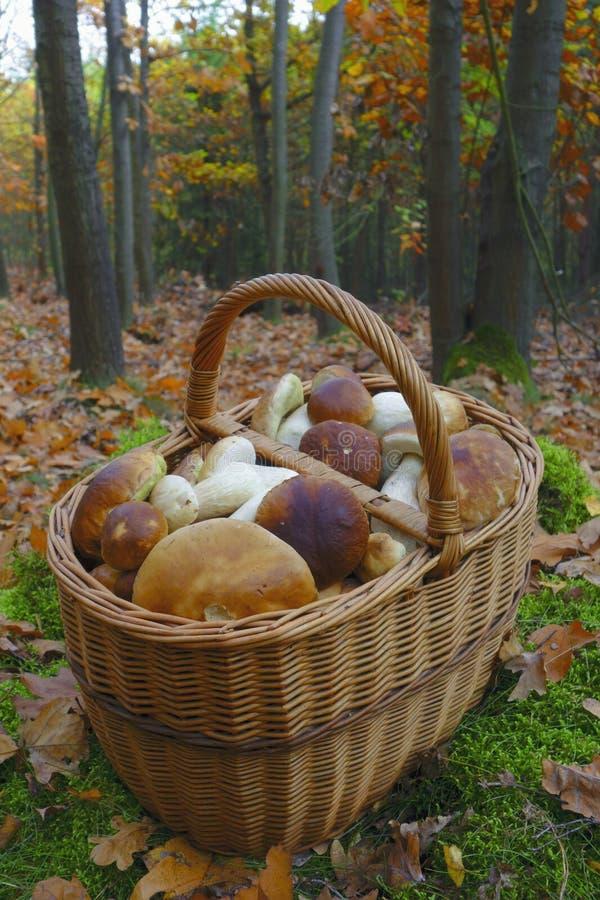 Freshly picked mushrooms stock photo