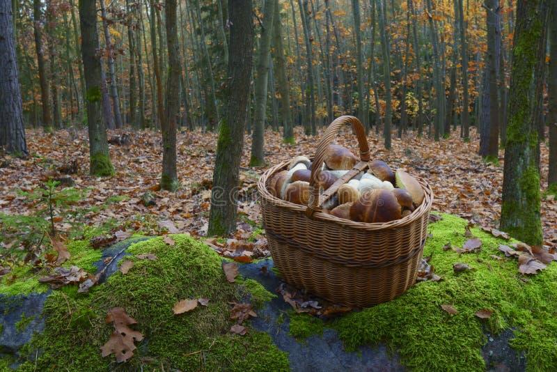 Mushroom season royalty free stock photo