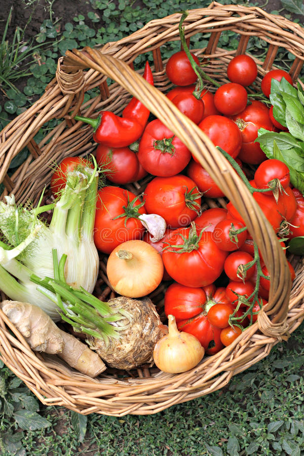 Download Basket With Fresh Vegetables Stock Photo - Image: 48559118