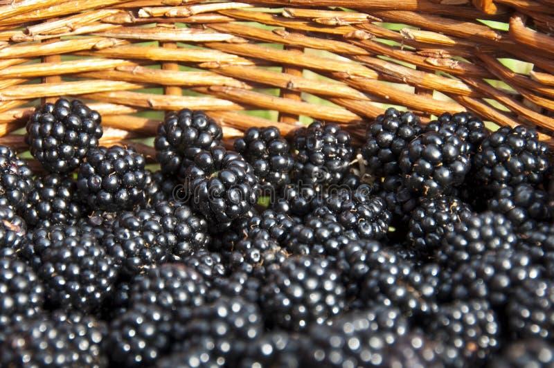 Basket full of blackberries stock photo
