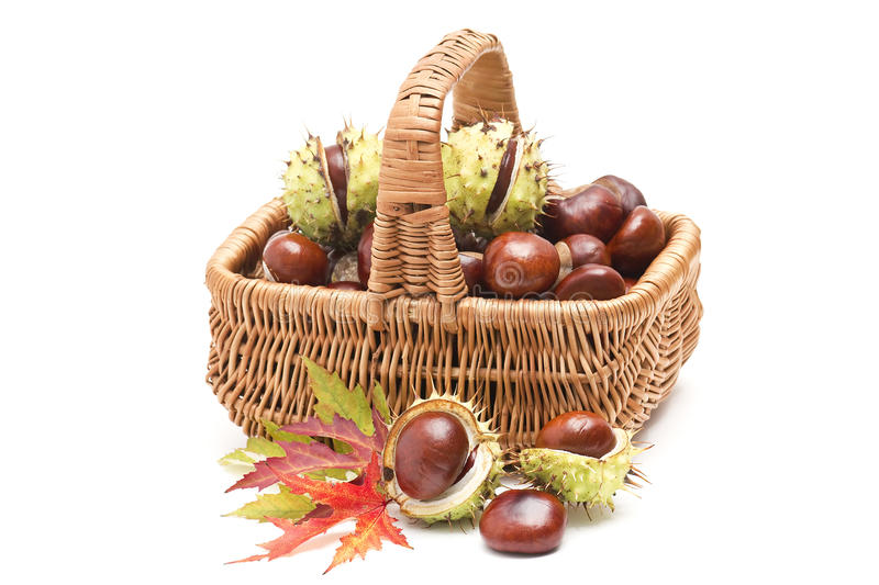Basket full of chestnuts and autumnal leaves royalty free stock image