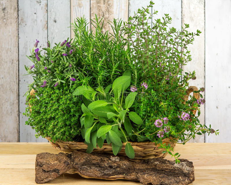 A basket full of herbs for the kitchen. stock image