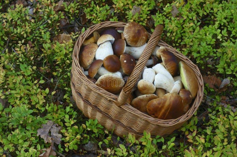 Basket full of mushrooms royalty free stock photos
