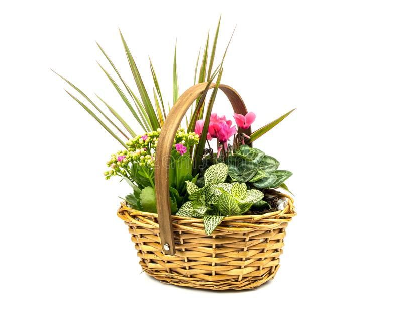 Basket full of plants. A view of a basket full of plants on a white background royalty free stock photos