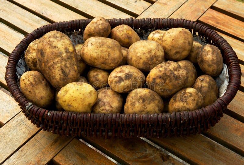 A basket full of potatoes royalty free stock photos