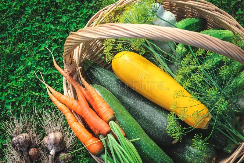 A basket full of summer end/autumn goodies - zucchini, cucumbers, carrots, garlic, dill royalty free stock photos